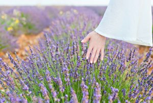 Sensory planting using herbs
